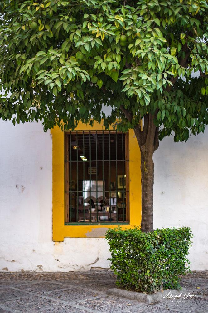 Seville-Spain-orange-tree-window