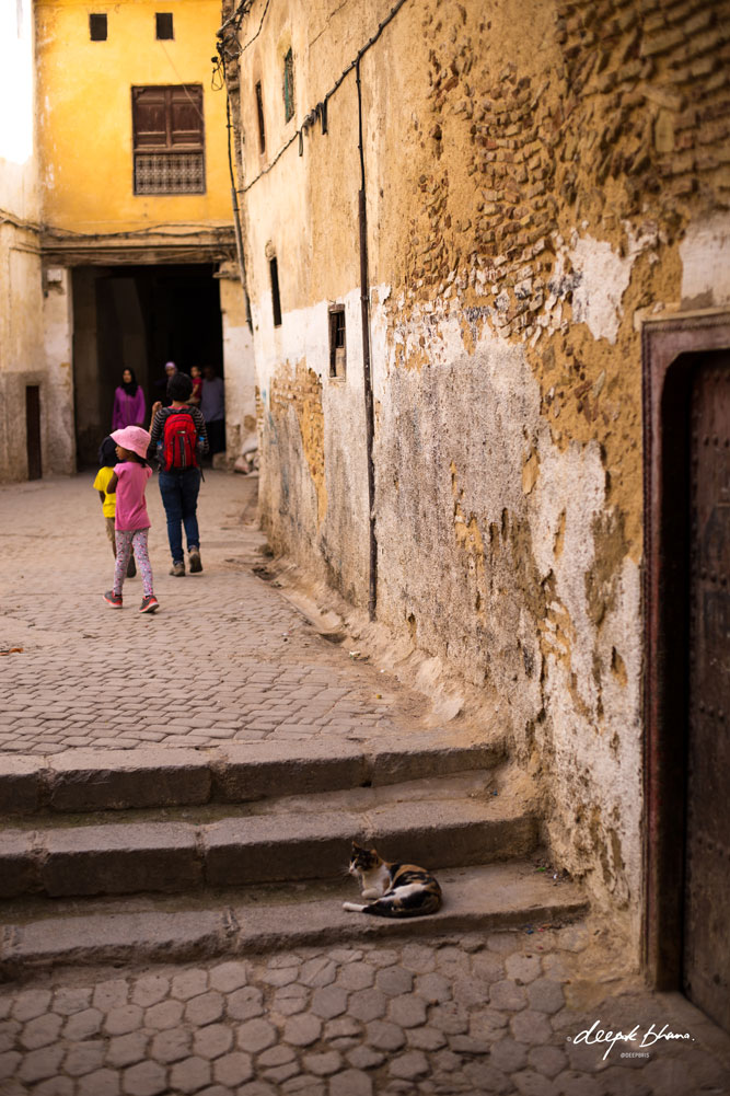 Todayfarer-family-Fes-Morocco with kids-walking-through-streets-cat